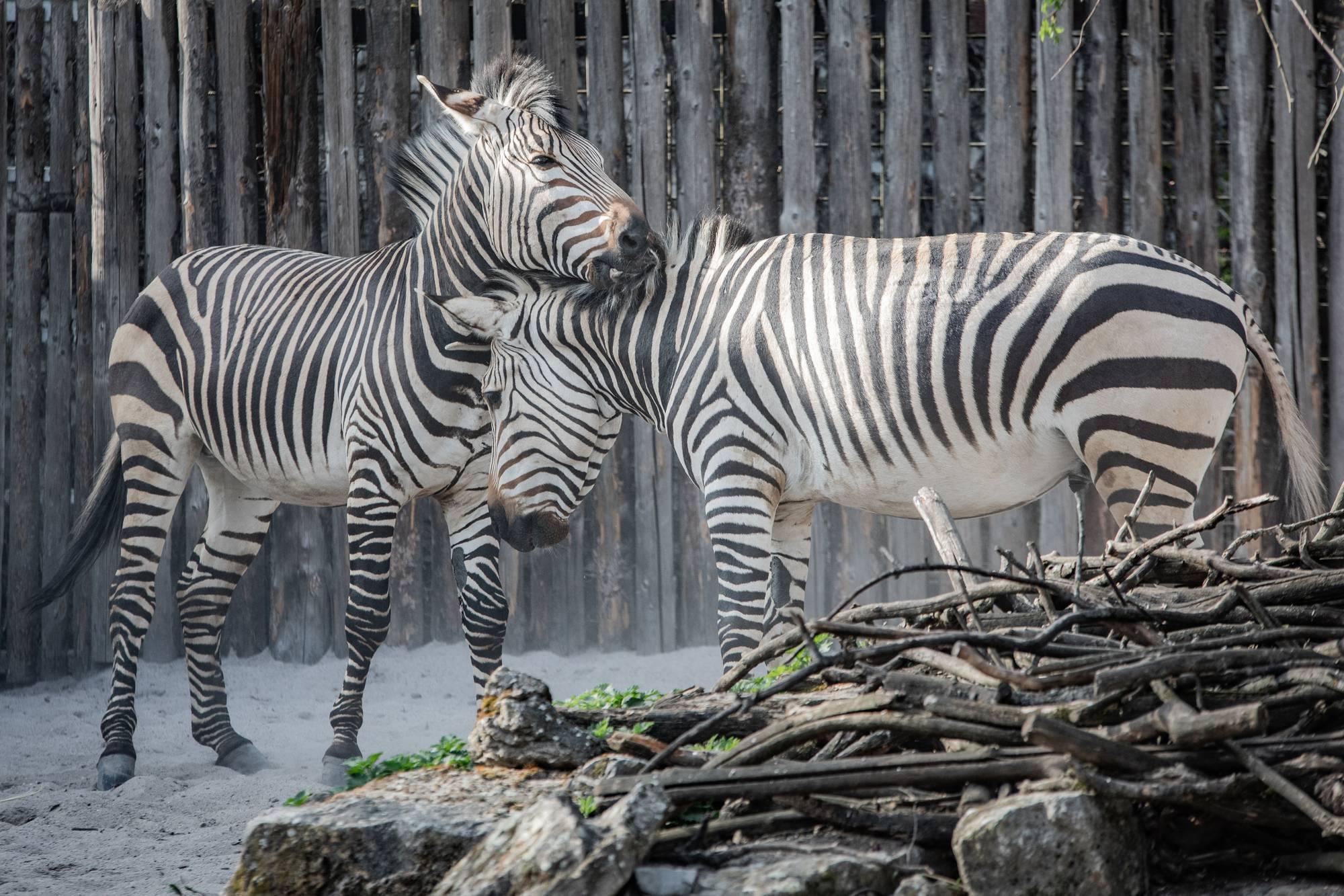 Zoo Landau Klehmann INTERNET 28